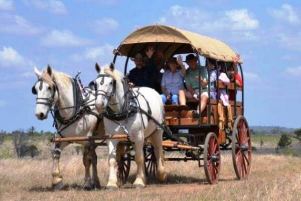 Texas Longhorn Wagon Tours